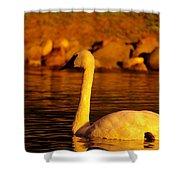 Swan Near Sundown Shower Curtain