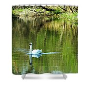 Swan On The Cong River Cong Ireland Shower Curtain