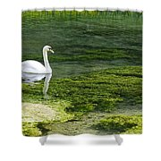 Swan On The River Lathkill Shower Curtain