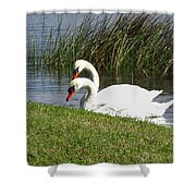 Swan Pair As Photographed Shower Curtain