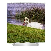 Swan Pair Warm Color Shower Curtain