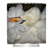 Swan Preening Shower Curtain
