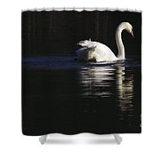 Swan Reflected Shower Curtain