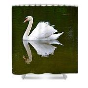 Swan Reflecting Shower Curtain