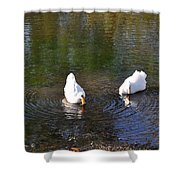 Swan Ripplle  Shower Curtain