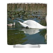 Swan Scenic Shower Curtain