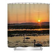 Swan Sun Shower Curtain
