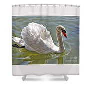 Swan Swimming By Shower Curtain