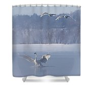 Two Swans Landing Shower Curtain