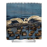 Swan Wings Reach Shower Curtain