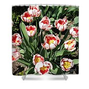 Swanhurst Tulips Shower Curtain