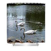 Swans And Ducks Shower Curtain