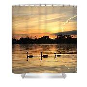 Swans At Dawn Shower Curtain