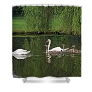 Swans At Two Months Shower Curtain