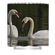Swans Courtship Shower Curtain
