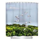 Swans In Flight Shower Curtain