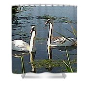 Swans In The Sunshine Shower Curtain