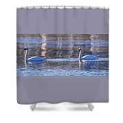 Swans In Winter Shower Curtain