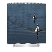 Swans On Blue Shower Curtain