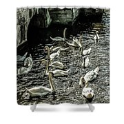 Swans On The Canal Shower Curtain