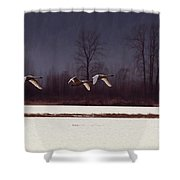 Swans Over The Marsh Shower Curtain