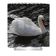 Swans Reflection Shower Curtain