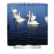 Swans Sligo Ireland Shower Curtain