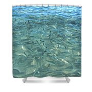 Swarming Fish Shower Curtain