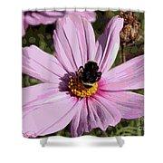 Sweet Bee On Pink Cosmos - Digital Art Shower Curtain