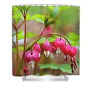 Sweet Bleeding Heart Shower Curtain