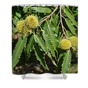 Sweet Chestnuts Shower Curtain