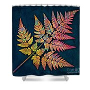 Sweet Cicely Shower Curtain