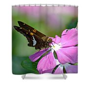 Sweet Desert Shower Curtain