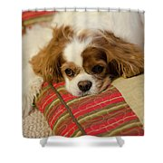 Sweet Dog Face Shower Curtain