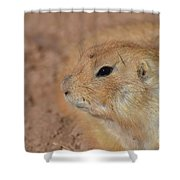 Sweet Face Of A Prairie Dog Up Close And Personal Shower Curtain