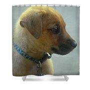 Sweet Faced Cunucu Puppy In Aruba Shower Curtain