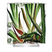 Sweet Flag Or Calamus, Acorus Calamus Shower Curtain