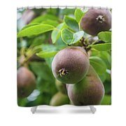 Sweet Fruit Shower Curtain