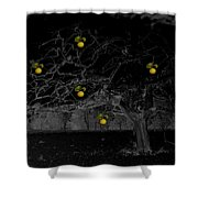 Sweet Fruit Shower Curtain by Holly Kempe