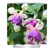 Sweet Fuchsia Flowers Shower Curtain