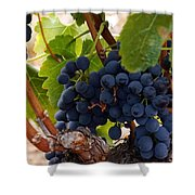 Sweet Grapes Shower Curtain