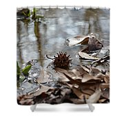 Sweet Gum Seed Pod In Mississippi Winter Shower Curtain