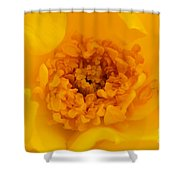 Sweet Heart Of Yellow Rose Shower Curtain