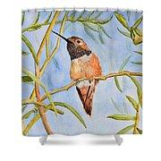 Sweet Hummingbird Shower Curtain
