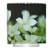 Sweet Hydrangea Shower Curtain