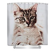 Sweet Jaspurr Shower Curtain