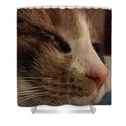 Sweet Kitten Shower Curtain