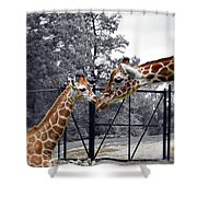 Sweet Moment Shower Curtain
