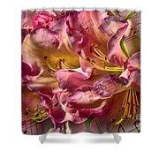 Sweet Notes Shower Curtain
