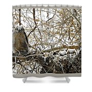 Sweet Owlets Shower Curtain